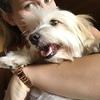 Meleana: Dogsitter sur Nîmes 🐶
