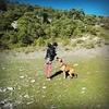 Eva: Paseo y cuido de tu mascota zona noreste