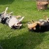 Anika: Hundesitting jetzt!