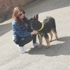 Lauren : Dog sitter in Birmingham