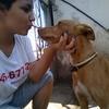 Esther: Amante de los perros! Se sentirán como en casa!!