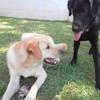 Angeles: Cuidadora de mascotas sin jaulas en chiclana de la frontera