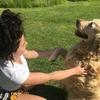 Mélodie : Une douce Mélodie pour vos chiens