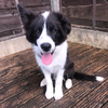 Sophie: Reliable and confident pet carer available 24/7