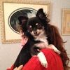 Anne Sophie: Dog sitter sur Versailles