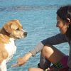 verónica: your dog on holidays