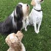 Sophia: Dog sitter in Chelsea