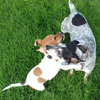 Rik: Tails In The Park - Dog Sitter Daily Walks & Play in Stockport