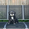 Frankie: Loving dog sitter in South London!