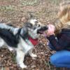 Victoria: Doggie Daycare