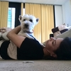 Olimar: Un segundo hogar para tu mascota