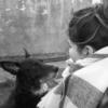 Laura : Athena_dog, passion chien