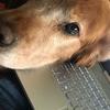 Willson: Paseo y cuidado de caninos en barcelona