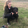 Ellie: Dog Boarding & Walking South County Dublin