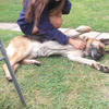Gabi: Gabi the dog's friend