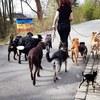 Christina : Pfötchenzeit - die Tierbetreuung
