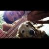 Alexei : Paseos Caninos