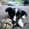 Natalia: Paseos, juego y educación canina