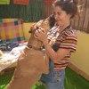 Elena: El mejor hogar perruno