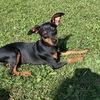 Ramona: Hundesitter in Trudering