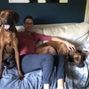 Joseph: Dog Sitter/Walker in Sevenoaks area