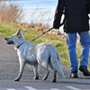 Olivier: Pet-sitter confirme a lille