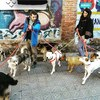 Jordi: Pareja amante de los animales, cuidadores con mucha experiencia