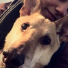 Jule: Hundesitter in Bielefeld Gellershagen