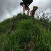 Isabel: Angehender Hundetrainer in Elternzeit