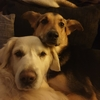 Natalie : Liebevolle Hundebetreuung am Rande Hamburgs