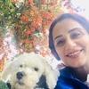 Kash: Koko's dog sitting/walking services