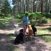 Jan :  Joy Bringer  Counry walks for bored dogs