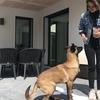 Constance : Dogsitter en attente de bonne compagnie canine