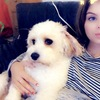 Jessica: Dog sitter in London