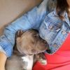 vania: Todos los perros son bellos