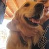 Vivienne Zoe : Love Dogs
