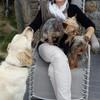 Nathalie: Garde D'animaux