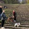 Philine : Enthusiastische Hundesitterin zentral in Heidelberg
