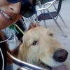 Rocío: Tu perrete en buenas manos en Chamberí