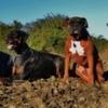 Róisín: Fun Dogs