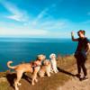 Anneka: Dog walker/ sitter : Shankill Bray Greystones