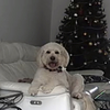 Gaye: Holiday Haven for Dogs with Gaye in Knocklyon Dublin 16