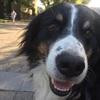 Leo: Cork City Dog Minding family
