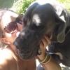 Gabriela: Cuidador perros bilbao
