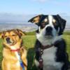 Iseult: Dog cuddler, walker, minder