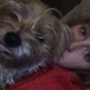 Rachel: Dog Walker/Sitter in Carlow