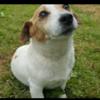 Emer: Loughrea Dog Walkers