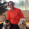 Orla: Greystones Dog Creche,  home from home,  dog walking or your home visits.
