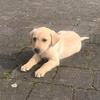 Sarah: Puppy love