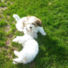 Cormac: Dog Sitting Sligo